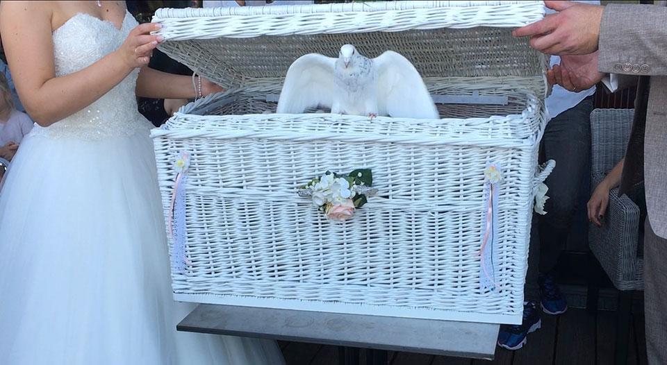 20190601-Hochzeitsfeier-hoch-oben-bei-den-Tauben-1
