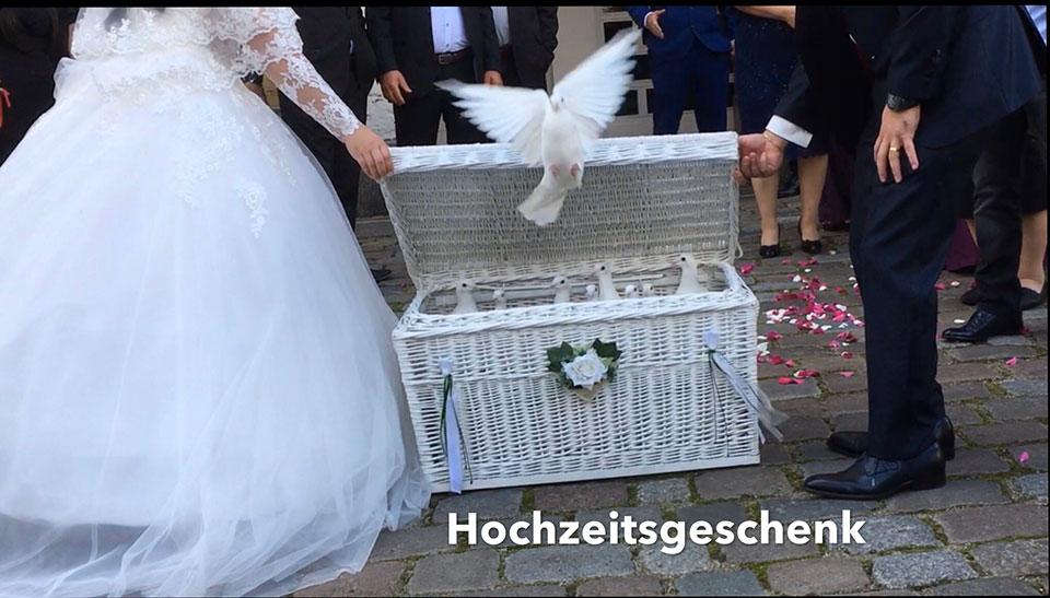 Ratzeburg-Hochzeitstauben-Hochzeitsgeschenk-Trauredner-kirchliche-Hochzeit-