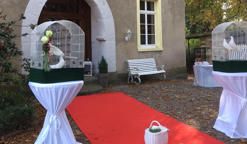 Hochzeitstauben-als-Geschenk-am-Haus-Keppelborg-in-Heek-Kreis-Borken-mit-freiem-Trauredner-